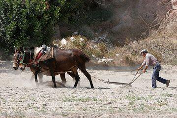 Man ploughing his field (Photo: Tom Pfeiffer)