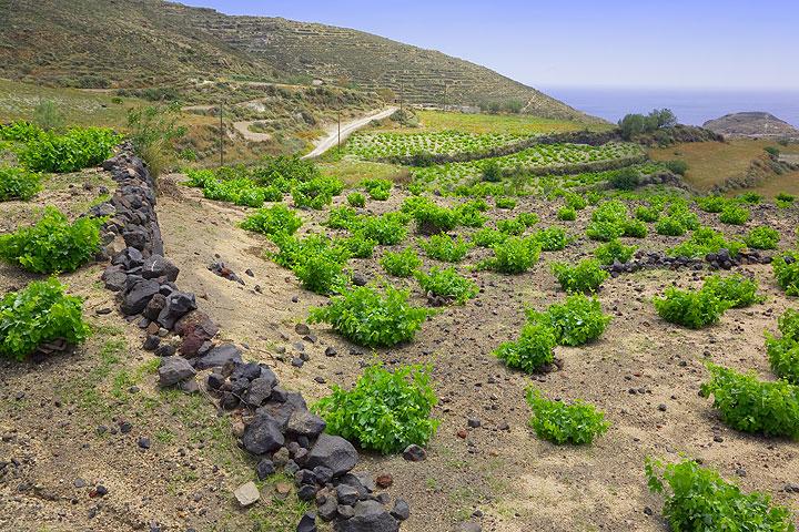Terraced vineyards (Photo: Tom Pfeiffer)