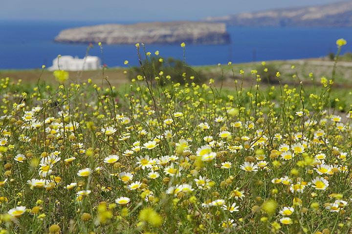 Spring-time meadow  (Photo: Tom Pfeiffer)