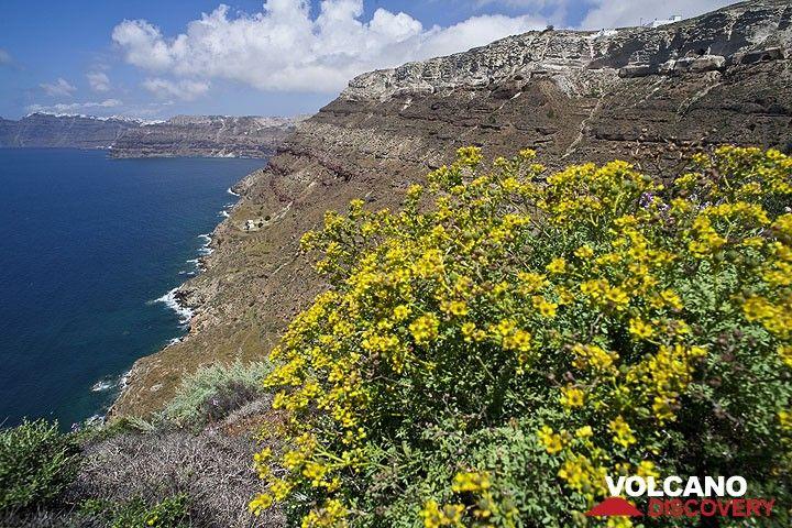 Spring-time at the caldera of Santorini (Photo: Tom Pfeiffer)