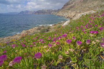 Midday flowers at Plaka (Photo: Tom Pfeiffer)