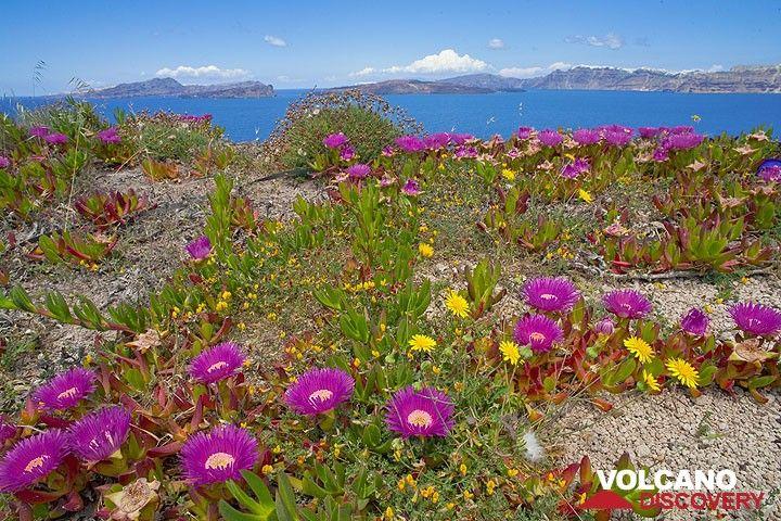 The caldera of Santorini in spring (Photo: Tom Pfeiffer)
