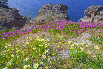 Spring-time flowers and the caldera (Photo: Tom Pfeiffer)