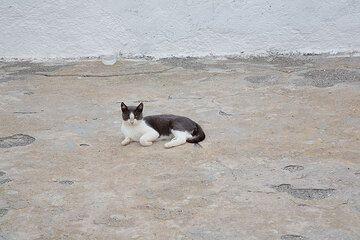 Santorini 2008: cats (Photo: Tom Pfeiffer)
