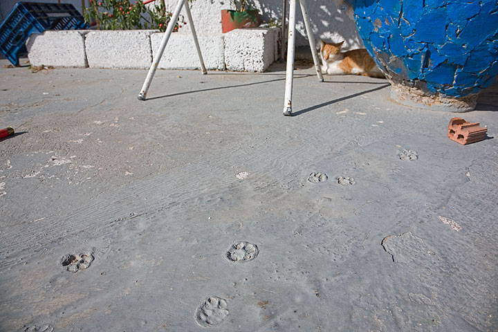 Traces in cement (Photo: Tom Pfeiffer)