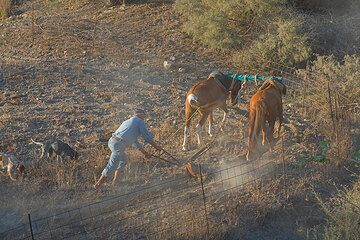 A man is ploughing his field with donkeys (Photo: Tom Pfeiffer)