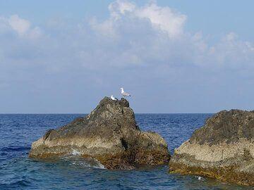 Sea gulls enjoying the sunshine from the rocks around Strombolicchio. (Photo: Ingrid Smet)