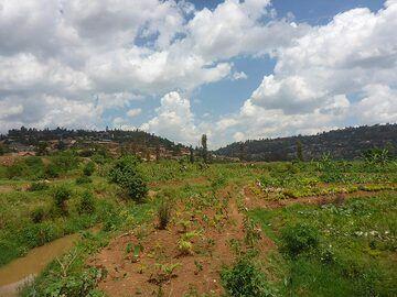 Day 1 - Fertile farmland on the outskirts of Rwanda´s capital (Photo: Ingrid Smet)