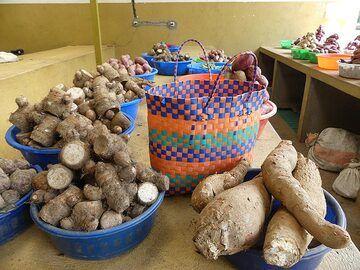 Day 2 - Root vegetables are very popular and easily grown in western Rwanda (Photo: Ingrid Smet)