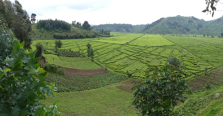 Day 2 - Typical cultivated Rwandan landscape (Photo: Ingrid Smet)
