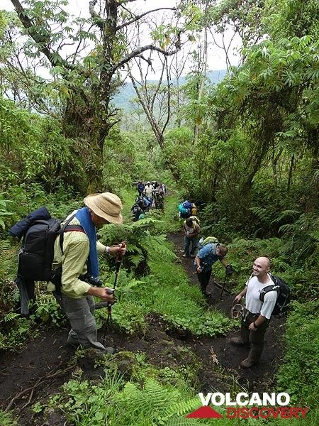 Day 3 - Continuing the hike up Nyiragongo we sporadically pass through some more densely vegetated areas (Photo: Ingrid Smet)