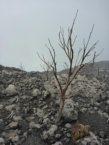 Day 5 - Although some parts of the caldera rim used to be vegetated, volcanic gases killed off these bushes in more recent times (Photo: Ingrid Smet)