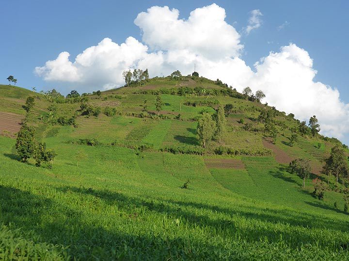 Day 7 - As in Rwanda, as much of the countryside is being cultivated as possible, including small scoria cones with fertile volcanic soils such as this one (Photo: Ingrid Smet)