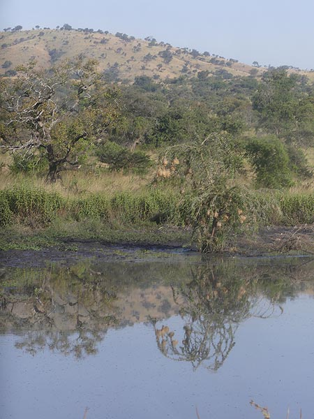 Akagera NP extension - Small pond with numerous weaver birds´nests in the small bush at the edge of the water (Photo: Ingrid Smet)