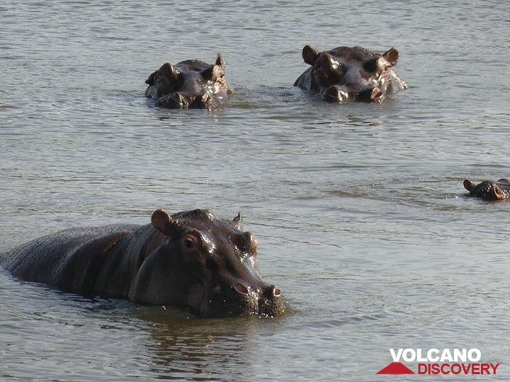 Akagera NP extension - hippos! (Photo: Ingrid Smet)