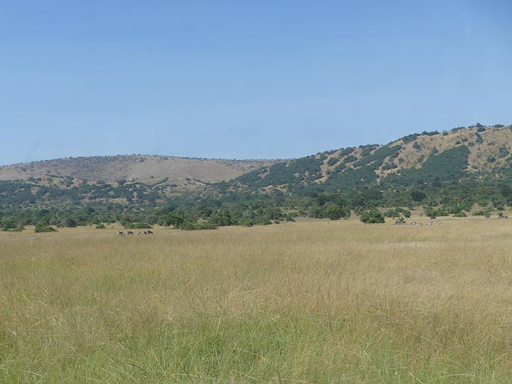 Akagera NP extension - View of the grass savanna in the northern part of the park (Photo: Ingrid Smet)