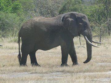AAkagera NP extension - elephant (Photo: Ingrid Smet)