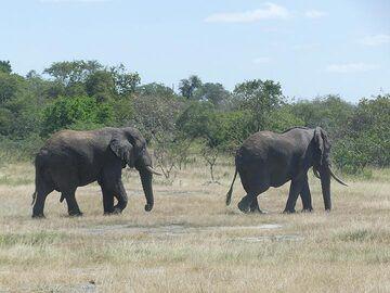 Akagera NP extension - elephants on the move (Photo: Ingrid Smet)