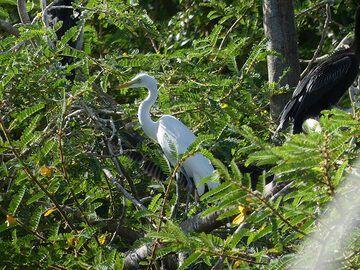 Akagera NP extension - wading bird (egret) (Photo: Ingrid Smet)