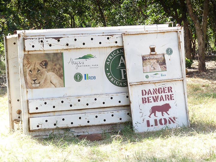 Akagera NP extension - the closest we (think) we got to the park´s lions that have been recently reintroduced (Photo: Ingrid Smet)