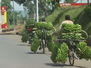 Akagera NP extension - bananas everywhere! (Photo: Ingrid Smet)