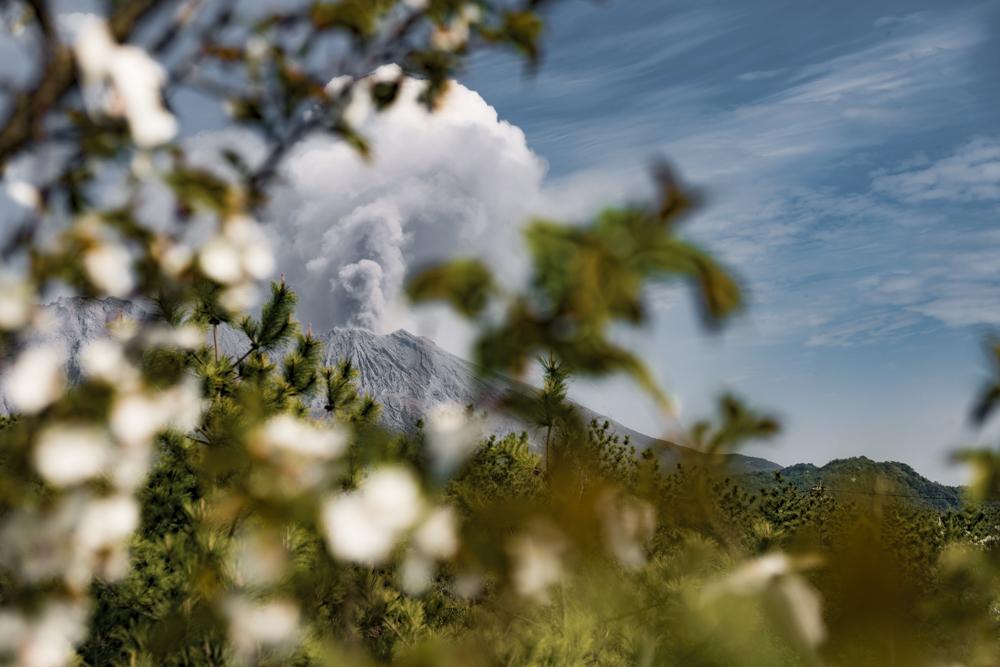 Cherry blossom and the volcano (Photo: Ivana Dorn)