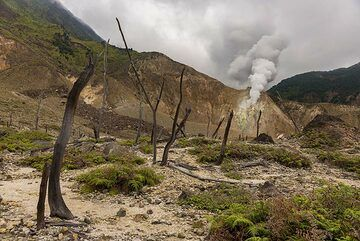 Remnants of volcanic forces, charred trees by the eruption in 2002 (Photo: Ivana Dorn)