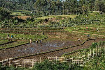 Rice terraces (Photo: Ivana Dorn)