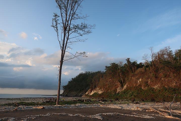 A single surviving tree on the beach of Panjang island (Photo: AndreyNikiforov)