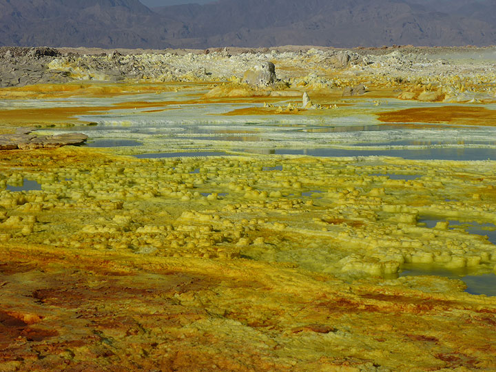 At Dallol, the areay covered by hydrothermal deposits and active salt springs and geysirs is the largest our main guide has witnssed in the 20 years he has been regularly visiting this scene. (Photo: Hans and Jooske)
