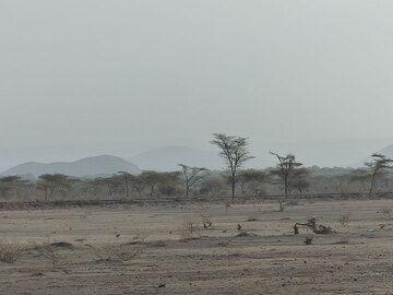 DAY 1: Dusty landscape at dusk, near Awash National Park (Photo: Ingrid)