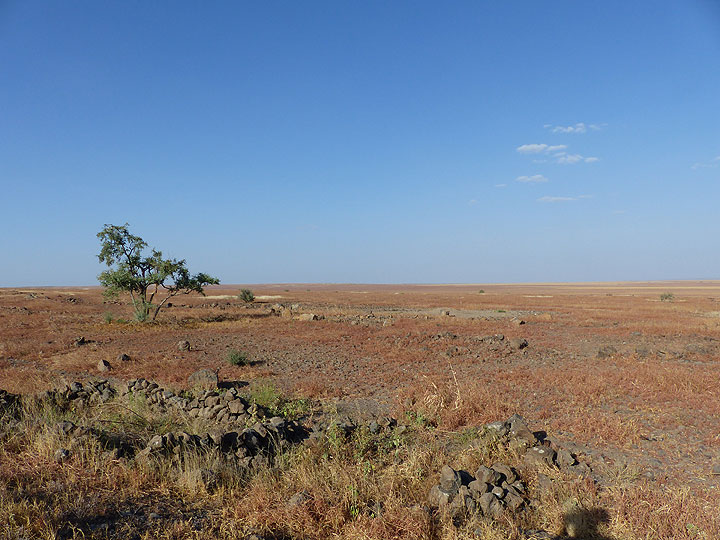 DAY 2: From Awash NP to Logia - the relatively green savannah gradually gives way to a less vegetated steppe landscape (Photo: Ingrid)