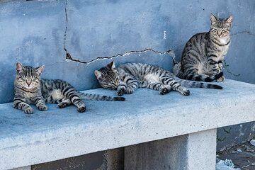 Cat group (Photo: Markus Heuer)