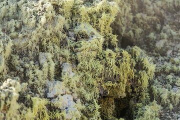 Delicate sulphur crystals cover much of the ground near the fumaroles. (Photo: Markus Heuer)