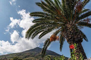 Date palm with Stromboli volcano behind (Photo: Markus Heuer)