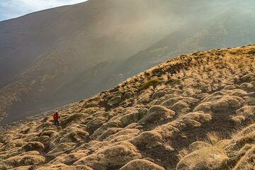 """Cushions of """"Spinosanto"""" (Astragalus siculus) cover much of the slopes between 1800-2400 m elevation at Etna. (Photo: Markus Heuer)"""
