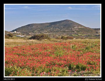 Milos_2011_0352.jpg (c)