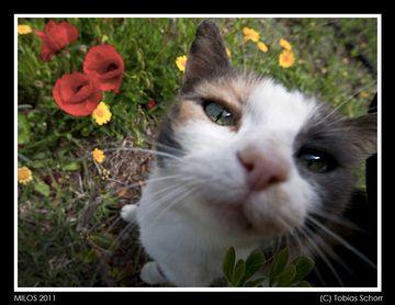 Milos_2011_0358.jpg (c)