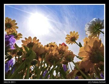 Milos_2011_0371.jpg (c)