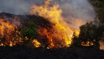 """Our friend and filmmaker Michael Dalton (Volcanic Odysseys) is currently on Hawai'i and sent us some images of the new lava flows advancing SE fro Pu'u 'O'o, reaching Pulama Pali on 29 June 2016. """"Amazing day yesterday on the Pali, very spectacular and at times fast moving flows.  We caught some incredible surges. The flow with the burning trees had to be moving close to 1ft a second during the fast surges that last 10 minutes or so."""" (Photo: Michael Dalton)"""