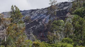 Remains of forest - a kipuka on the Pulama pali. (Photo: Michael Dalton)