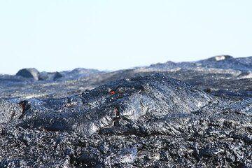 Lava turtle (Photo: Paul Reichert)