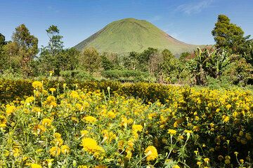Flowers in front of Lokon volcano (Photo: Thomas Spinner)
