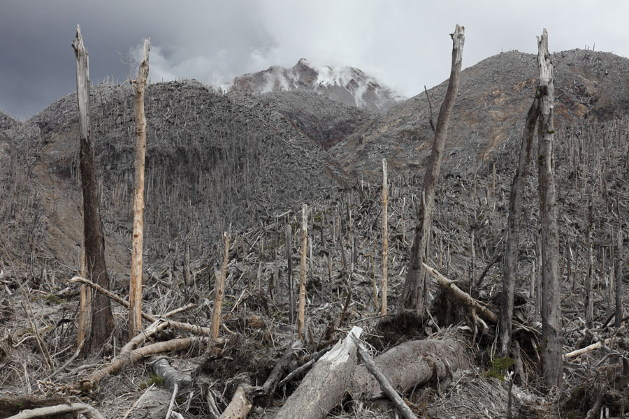 Pyroclastic flows have destroyed forest on the north side of Chaiten volcano's lava dome. (Photo: Richard Roscoe)