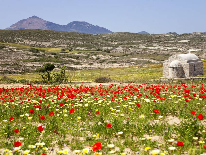 Spring on Milos island (Photo: Tobias Schorr)