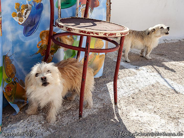 Little dogs at Acrotiri village. (Photo: Tobias Schorr)