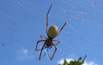 Spider (Photo: Yashmin Chebli)