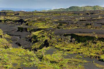 Erosion gullies in the Ambrym caldera (Vanuatu) (Photo: Tom Pfeiffer)