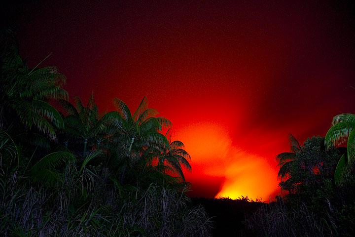 Palm trees in the Ambrym caldera (Photo: Tom Pfeiffer)