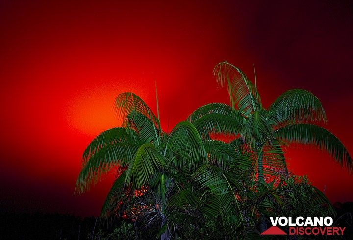Palmen vor einem roten Himmel über dem Ambrym Vulkan (Photo: Tom Pfeiffer)